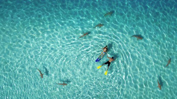 """""""Buceo con tiburones"""" de Mike Gandouin"""